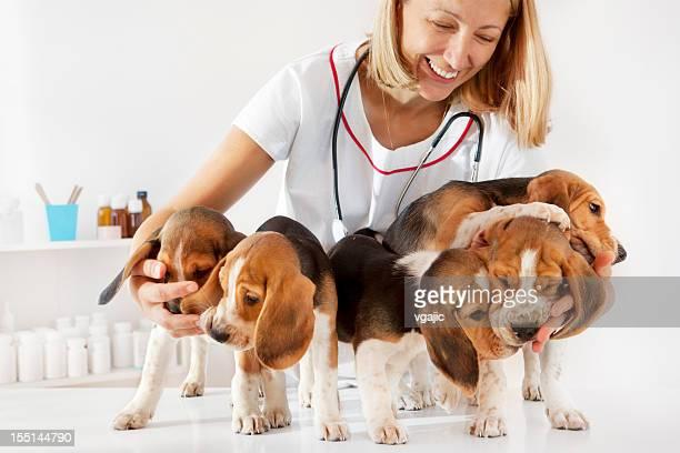 Junge weibliche Tierarzt umarmen niedlichen kleinen Welpen