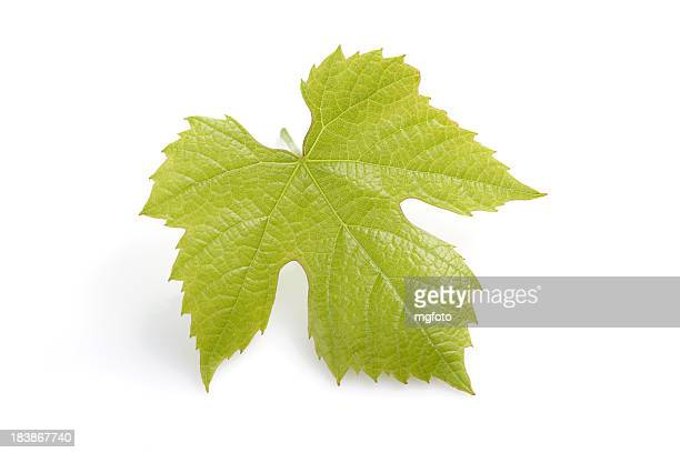 young fresh grape leaf - grape leaf stock pictures, royalty-free photos & images