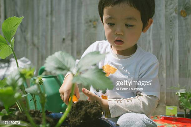 young gardener - peter lourenco stock pictures, royalty-free photos & images