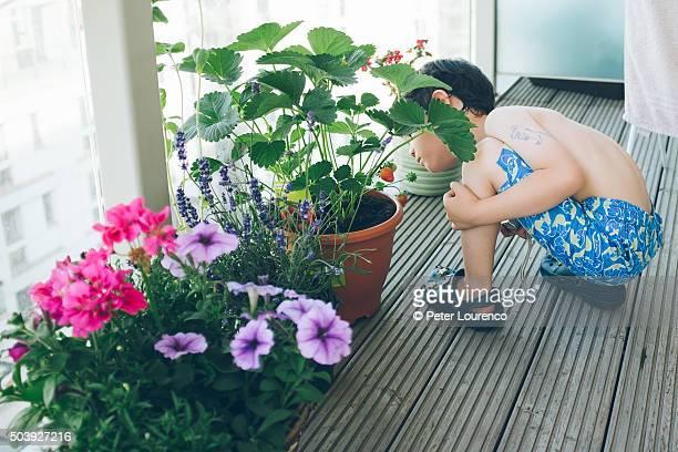 young gardener - peter lourenco stock-fotos und bilder