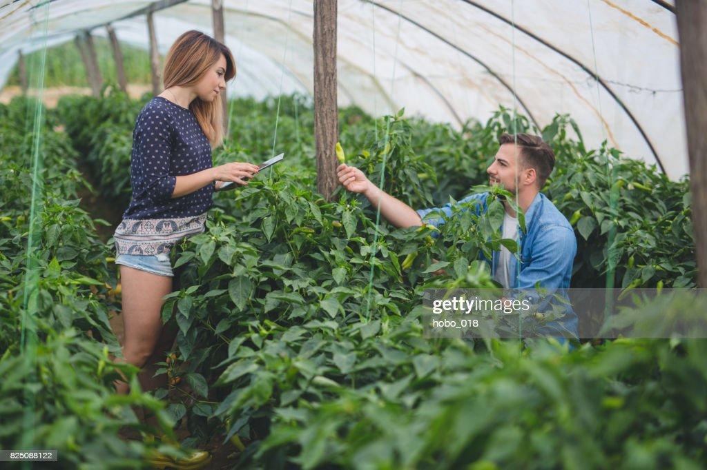 Junge Gärtner Im Gewächshaus Mit Gemüse Stock-Foto   Getty Images