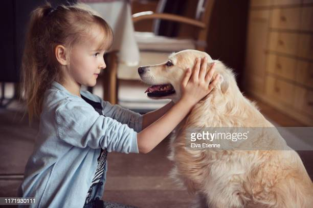 young girl affectionatly stroking a pet dog in a domestic home - ゴールデンレトリバー ストックフォトと画像