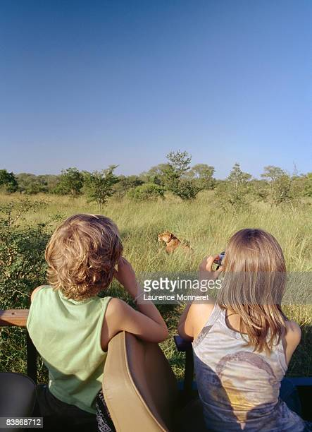 Young girl and boy in safari watching a lioness