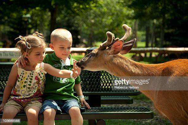 young girl and boy on bench being sniffed by deer - zoo stock pictures, royalty-free photos & images
