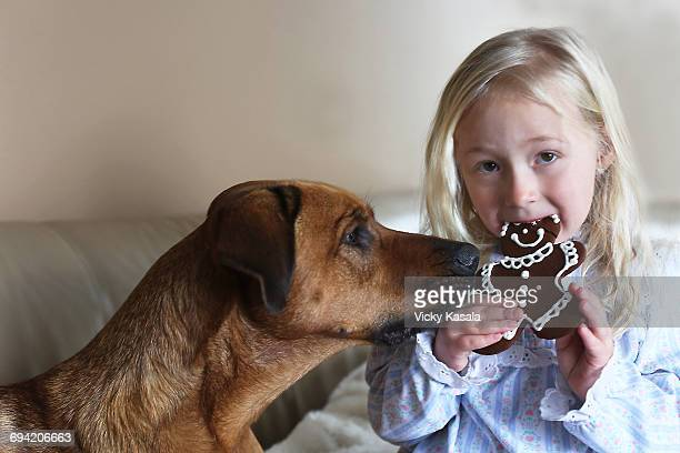 young girl and dog eating ginger bread cookie. - dog eats out girl stock photos and pictures