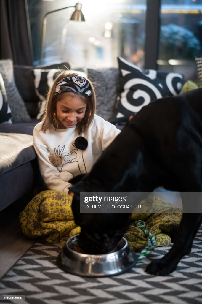 Young girl and her dog : Stock Photo