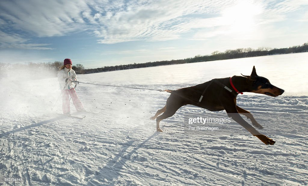 A young girl and her dog skiing on a lake : Stock Photo