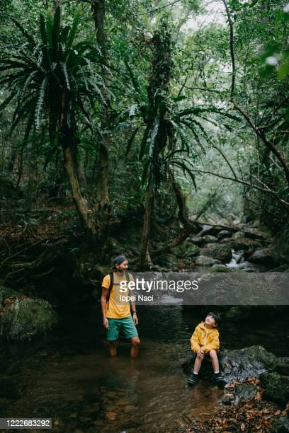 young girl and her father hiking in jungle, amami oshima island, japan - reality fernsehen stock pictures, royalty-free photos & images
