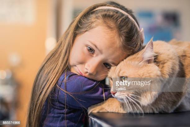 young girl and her maine coon cat on the visit to the vet. - cat family stock pictures, royalty-free photos & images