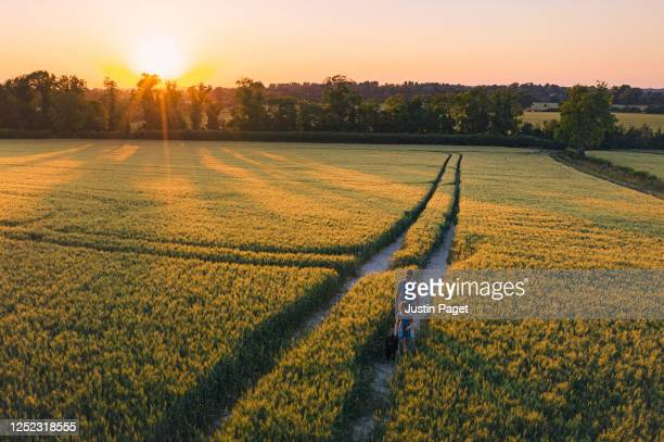 young girl and her mother walking the dog at sunset - field stock pictures, royalty-free photos & images
