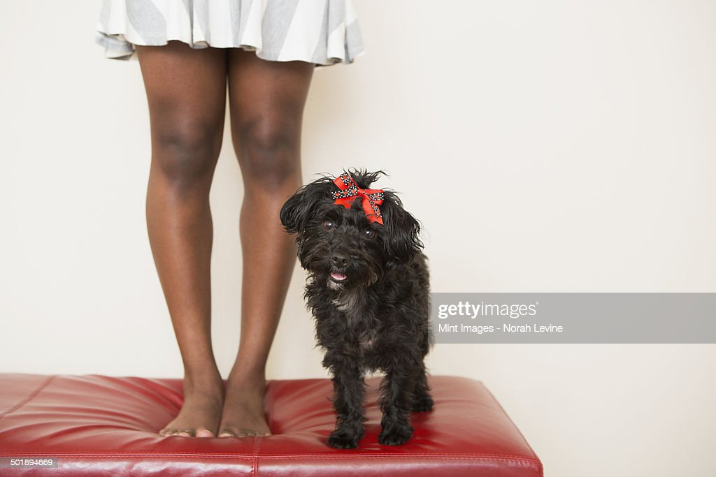 A young girl and her small black dog standing on a stool. : Stock Photo