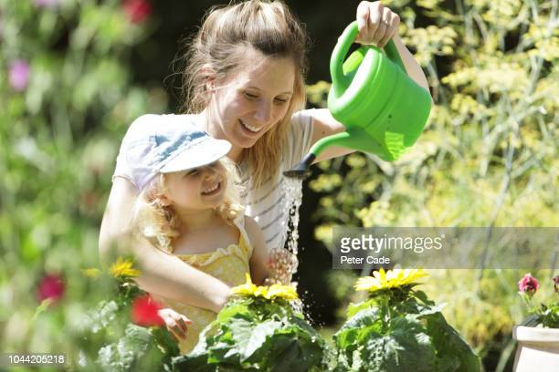 young girl and mother watering sunflowers in garden - family with one child stock pictures, royalty-free photos & images