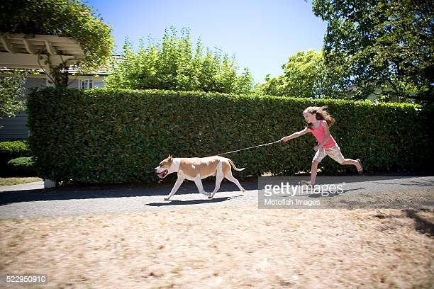 Young Girl Being Pulled Down Sidewalk by American Staffordshire Terrier