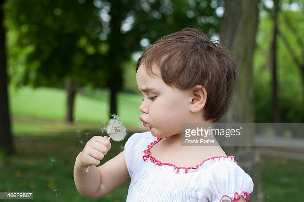 young girl blowing a blowball / dandelon seed head - teasing stock pictures, royalty-free photos & images