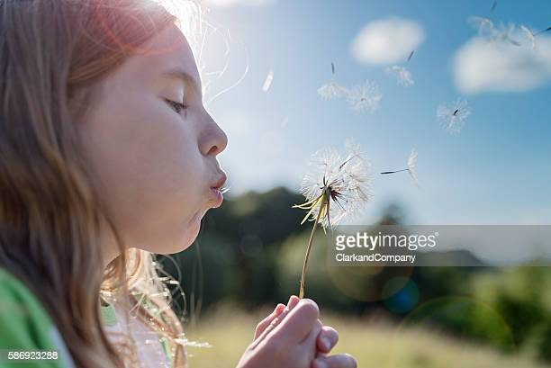 young girl blowing dandelions. - wind stockfoto's en -beelden