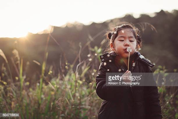 Young Girl Blowing On Dandelion At Sunset