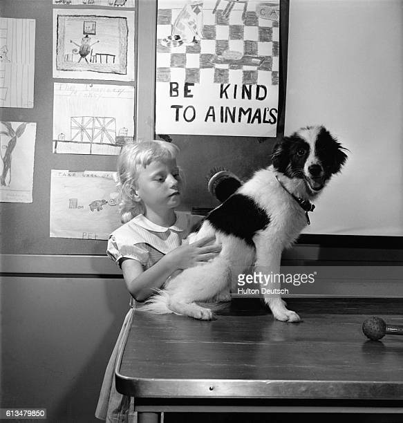 A young girl brushes her pet dog adopted from the American Society of the Prevention of Cruelty to Animals headquarters in New York USA ca 1950