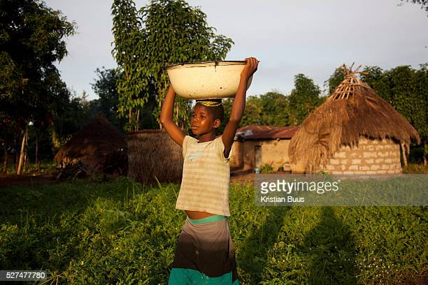 A young girl carries a load of vegetables in a bowl on her head in the vening light in rural Makurdi in Benue state My QandA is mobile phone text...