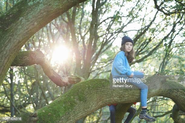 young girl climbing an oak tree - のぼり ストックフォトと画像