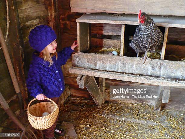 Young girl collecting eggs