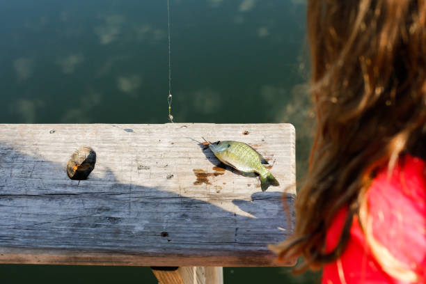 A young girl examines a Small Fish