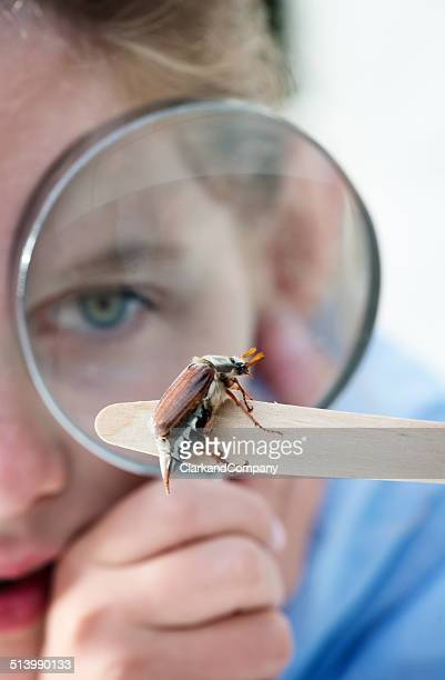 Young Girl Examining Maybug Beetle or Melolontha melolontha.