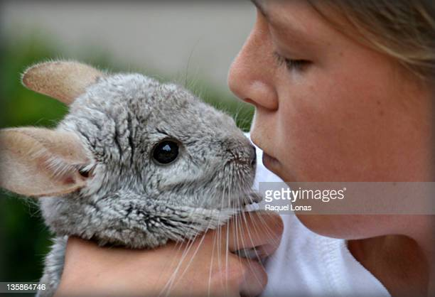 Young girl face to face with gray chinchilla