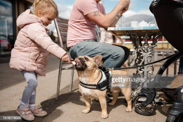 young girl feeding dog ice cream - dog eats out girl stock pictures, royalty-free photos & images