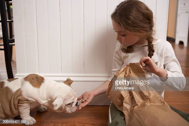 young girl (8-10) feeding dog - dog eats out girl stock pictures, royalty-free photos & images