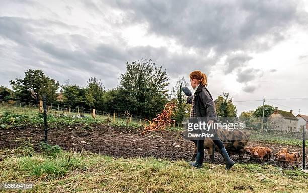 Young girl de alimentar a los cerdos en pequeñas retención