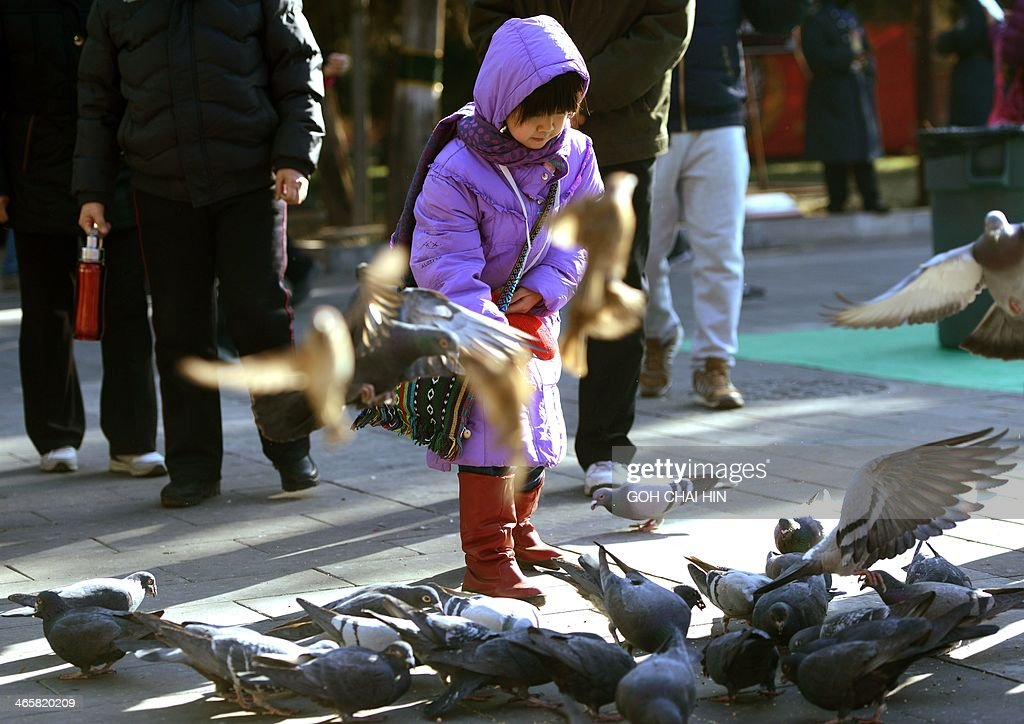 A young girl feeds pigeons at the Ditan park temple fair in Beijing on January 30, 2014, on the eve of the Lunar New Year. Over a billion Chinese in China and millions more all over the world will be celebrating the Lunar New Year, known as the Spring Festival in China.