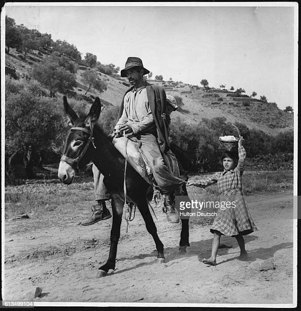 A young girl follows behind a mule en route to the port vineyards through the Val d'Aguedinho Harvest time known as the 'vintage season' begins at...