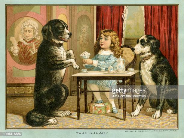 A young girl has a tea party with two dogs one of which is standing on its hind legs for a treat circa 1910