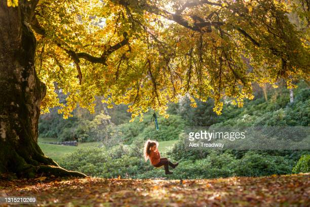a young girl has fun on a rope swing under a big tree in soft sunset light in scotland - innocence stock pictures, royalty-free photos & images