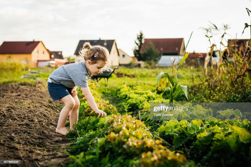 Young Girl Helping Family With Harvest At Urban Farm : Stock Photo