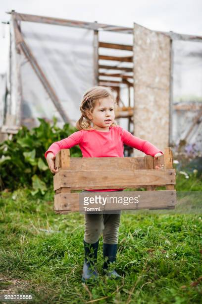 young girl helping out on farm carrying basket - rural scene stock pictures, royalty-free photos & images