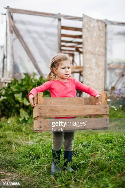 jong meisje helpen uit op boerderij uitvoering mand - weiland stockfoto's en -beelden