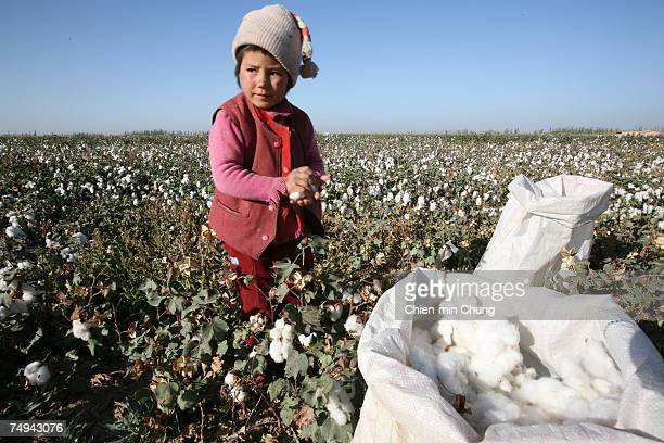 A young girl helps her family pick cotton on October 19 2005 in Xinjiang Uyghur Autonomous Region city Maigaiti China Xinjiang is one of China's...