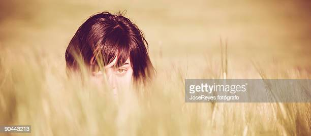 young girl hidden in a wheat field - fotógrafo stock photos and pictures
