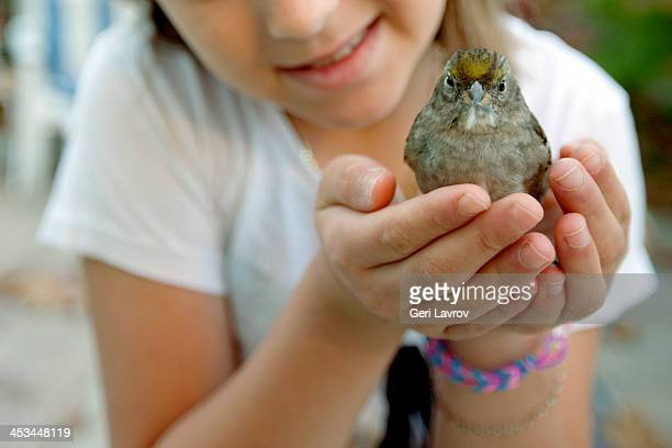 Young girl holding a house sparrow in her hands