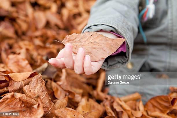 young girl holding a leaf - stefanie grewel stock-fotos und bilder