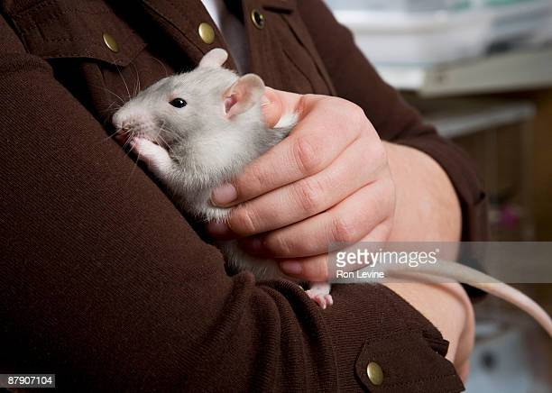 young girl holding a rat in pet shop, close-up - ratazana imagens e fotografias de stock