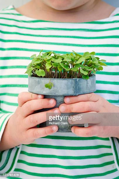 Young girl holding potted rocket (Eruca sativa) seedling (Part of series)