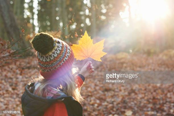 young girl holding up a leaf to examine it in a beam of autumnal sunlight - november stock pictures, royalty-free photos & images