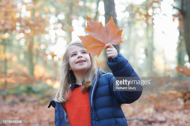 Young girl holding up a leaf to examine it in Autumnal woodland