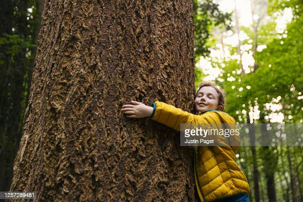 young girl hugging a big tree trunk - tree stock pictures, royalty-free photos & images