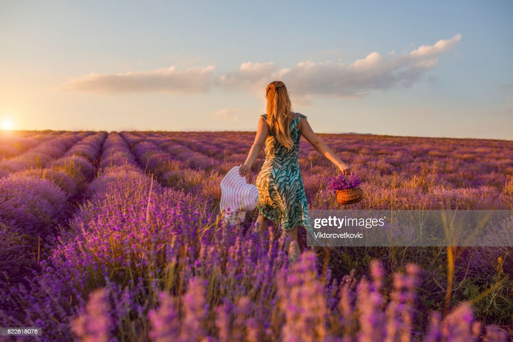 Young girl in a purple flowers of lavender : Stock Photo