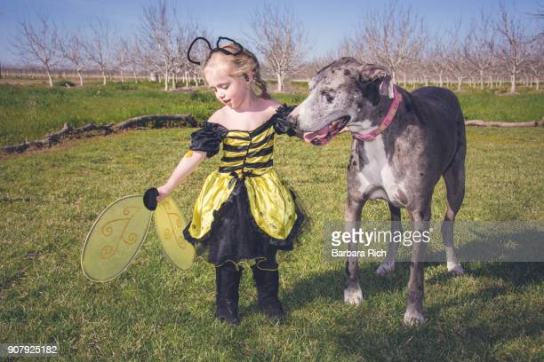 Young girl in bee costume holding on to large Great Dane dog
