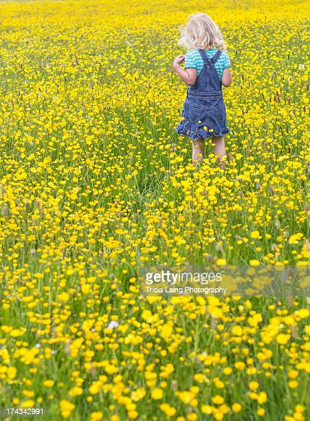 young girl in field of yellow buttercups - buttercup stock pictures, royalty-free photos & images