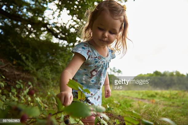 Young girl in field, picking berries